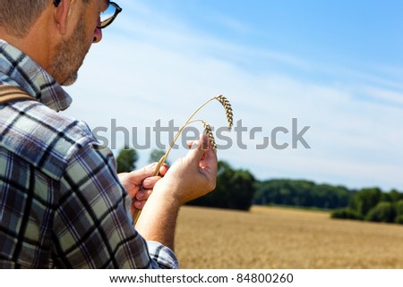 a farmer checks his fields in agriculture. mature wheat field in summer. - stock photo