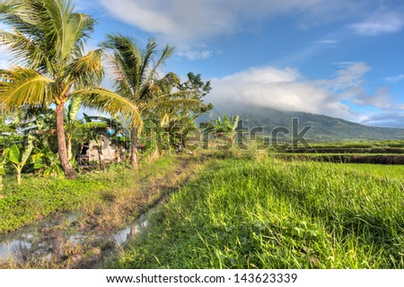 A farmer's hut stands in the middle of a rice field. At the base of Mount Isarog in the Bicol region of the Philippines.