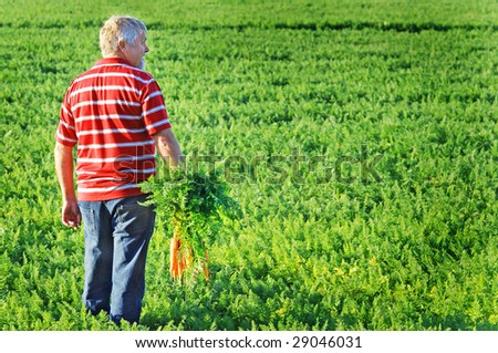 A farmer with a bunch of carrots in his hands standing in a carrot field - stock photo