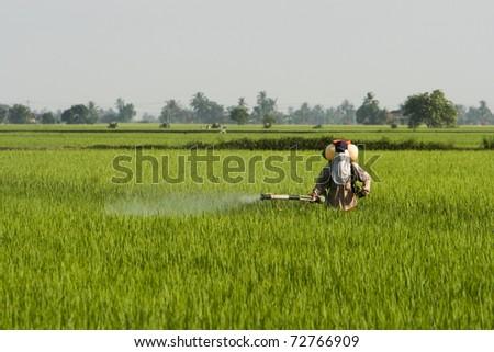 A farmer working at paddy field in Sekinchan, Malaysia. - stock photo