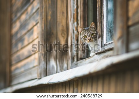 A fat cat sitting on a window sill looking outside. - stock photo