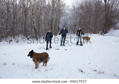 A father, son, and daughter snowshoeing in the White Mountains of New Hampshire.  Two dogs accompany them. - stock photo