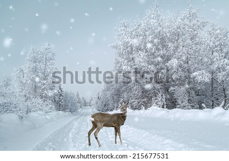 A fawn stands on the snowy road,snowy trees and snowflakes - stock photo
