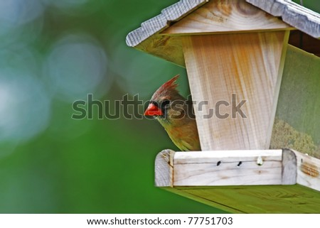 A female cardinal perched at a wooden bird feeder