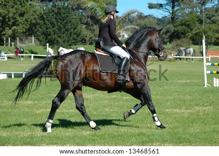 A female caucasian horse rider riding her beautiful brown horse at the riding sport school outdoors in training for an equestrian sport tournament