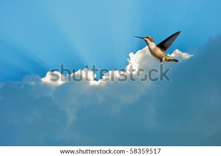 A female ruby throat hummingbird in motion against a brilliant blue sky with sun beams and clouds. - stock photo