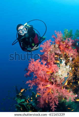 A female scuba diver next to a vibrant soft coral reef. - stock photo