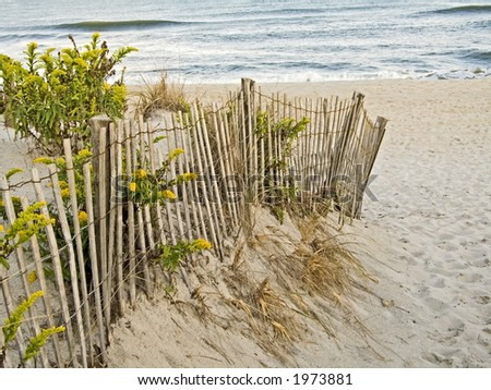 A fence, sand dunes and goldenrod along the New Jersey shore. - stock photo