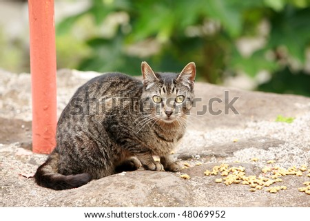stray tabby naughty