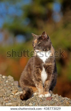 A Feral Cat Resting on a Pile of Rocks While Searching for Prey