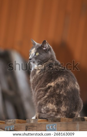 A Feral Cat Searching Through a Wood Pile for Prey - stock photo