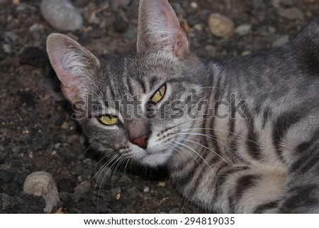 A Feral Cat Sleeping Outside - stock photo
