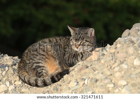 A Feral Cat Sleeping Outside on a Pile of Rocks - stock photo