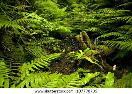 A fern is any one of a group of about 12,000 species of plants belonging to the botanical group known as Pteridophyta.