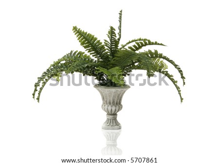 A fern plant in a stone vase over a white background - stock photo