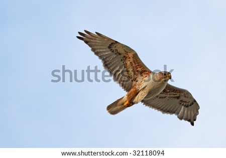 A Ferruginous Hawk flying with wings spread. - stock photo