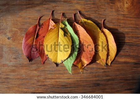 a few colored autumn leaves on a wooden board - stock photo