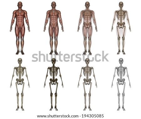 A few different people with different body systems highlighted - stock photo