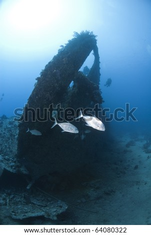 A few Jackfish passing by the stern of the Dunraven shipwreck. Beacon Rock, Red Sea, Egypt.