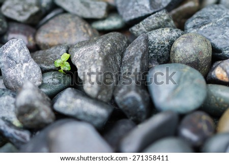 A few leaves from a small green plant growing and pushing through big heavy black rocks. - stock photo