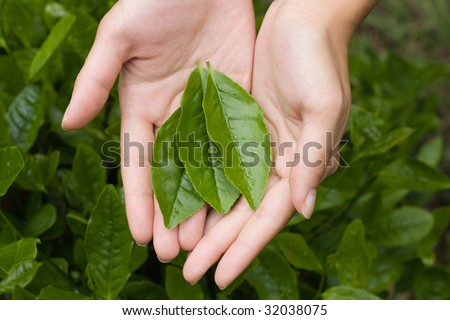 A few tea leaves in a young woman's hands