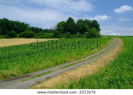 a field cart road through a  maizefield and trees in the background