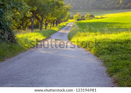 A field concrete road in the warm evening sun, to left apple orchard, by Beckingen,  Saarland / Germany,