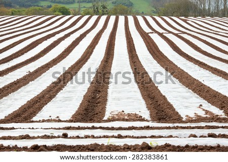 A field covered with Polytunnels to help protect the crops on a farm - stock photo