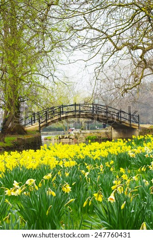 A field of daffodils in front of a romantic bridge over a river. Taken in Oxford, England, UK. - stock photo