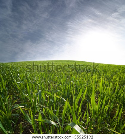 a field of green wheat and cloudscape at the sunset - stock photo