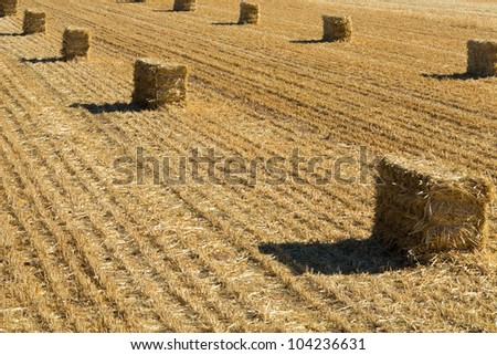 A field of straw bales immediately after cutting.