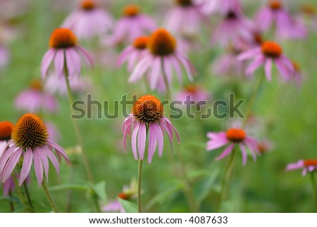 A field of wild flowers at a western Missouri nature park. - stock photo