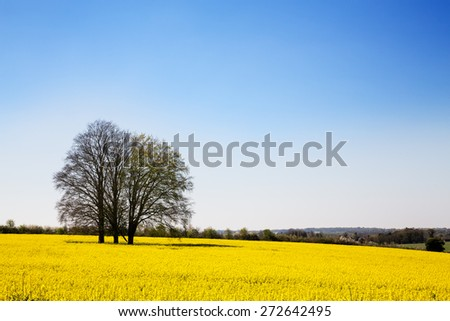 A field of yellow rape or canola flowers, grown for the rapeseed oil crop. Late spring in Hampshire,  - stock photo