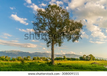 A field with a big tree near the Inle Lake in Myanmar at late afternoon - stock photo