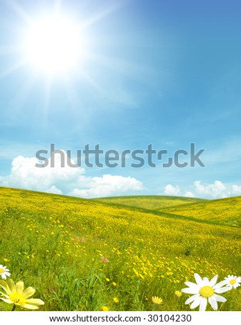 A field with yellow flower - stock photo