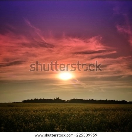 A fiery sunset over a forest and a field. - stock photo