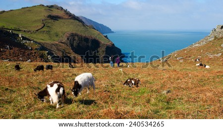 A fine early Spring day, wild goats and walkers, Valley of the Rocks, Lynton, north Devon, England, UK. - stock photo