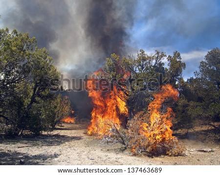 A fire burning in a pinyon-juniper shrub land. - stock photo