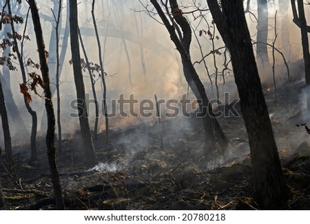 A fire in leafy forest. Autumn. - stock photo