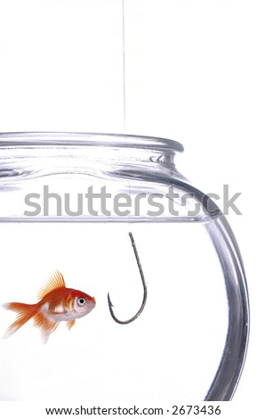 A fish gawks at a hook hanging in the fish bowl. White background. - stock photo
