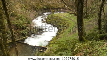 A fish ladder curves through forest for Salmon spawning in Oregon - stock photo