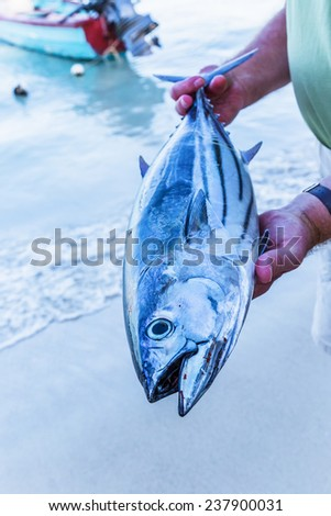 A fisherman holding his freshly caught striped bellied tuna on a Jamaica beach. - stock photo