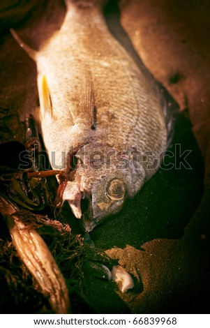 A Fishy Find With A Washed Up Fish On The Shoreline - stock photo