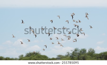 A flock of birds flying high up in the air with its wings spread - stock photo