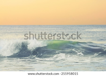 A flock of birds hovering above the waves - stock photo