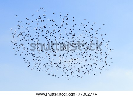 A flock of birds in the blue sky. - stock photo