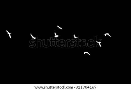 a flock of birds on a black background - stock photo