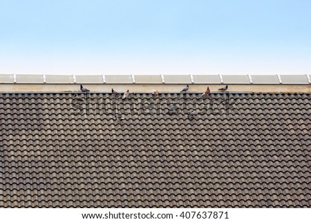 A flock of domestic pigeons on the roof - stock photo
