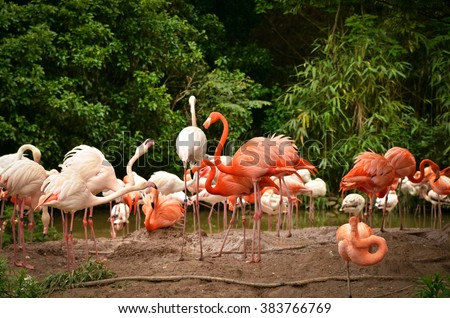 A flock of flamingos in the Shanghai Zoo