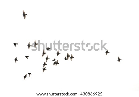 a flock of flying birds.  - stock photo